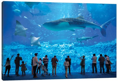 Whale Shark At The Osaka Kaiyukan Aquarium Canvas Art Print