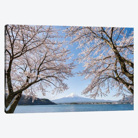Mount Fuji In Spring With Cherry Blossom Tree, Lake Kawaguchiko, Japan Canvas Print #JNB1485} by Jan Becke Art Print