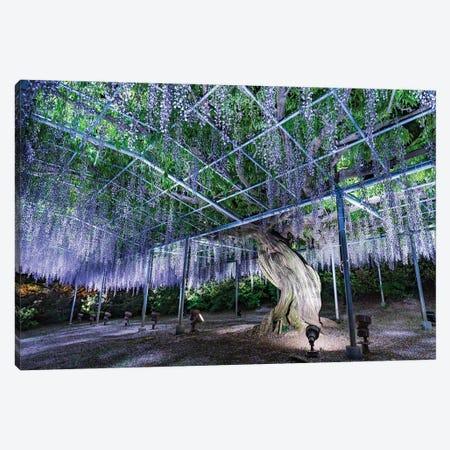 Purple Wisteria Tree At The Ashikaga Flower Park, Tochigi Prefecture, Japan Canvas Print #JNB1500} by Jan Becke Art Print