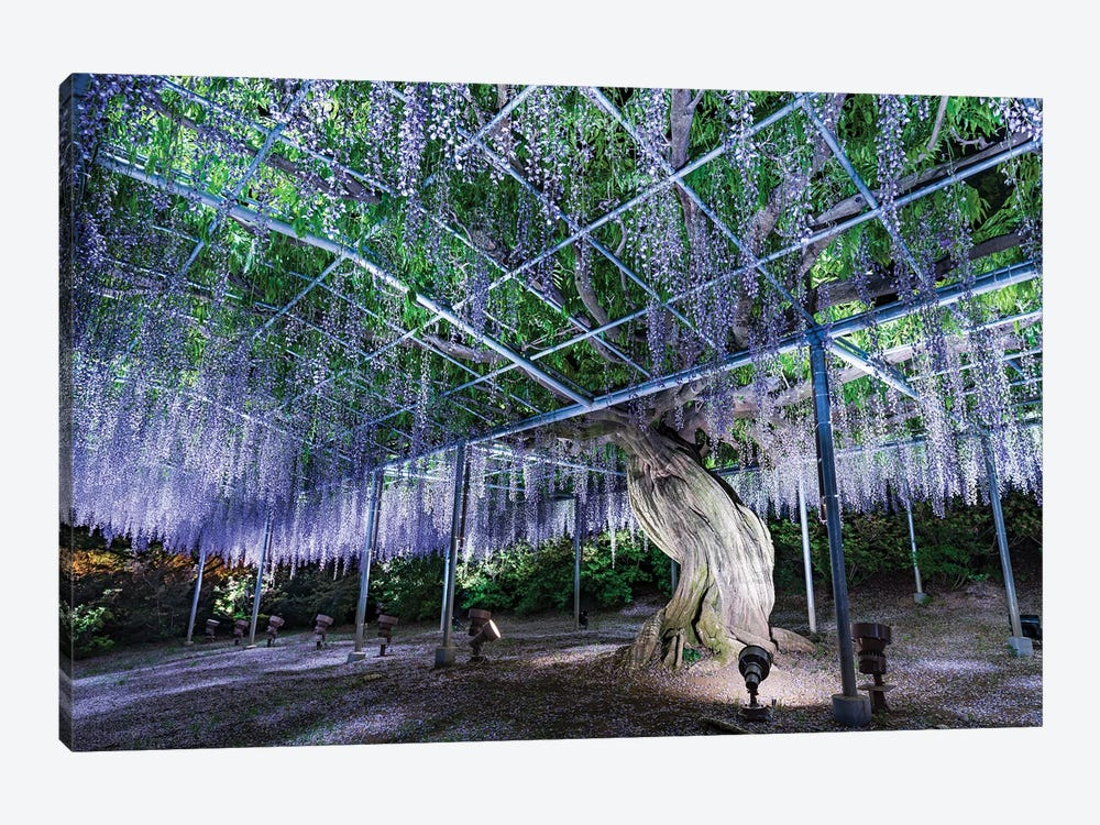 Purple Wisteria Tree At The Ashikaga Flower Park, Tochigi Prefecture, Japan by Jan Becke 1-piece Canvas Wall Art