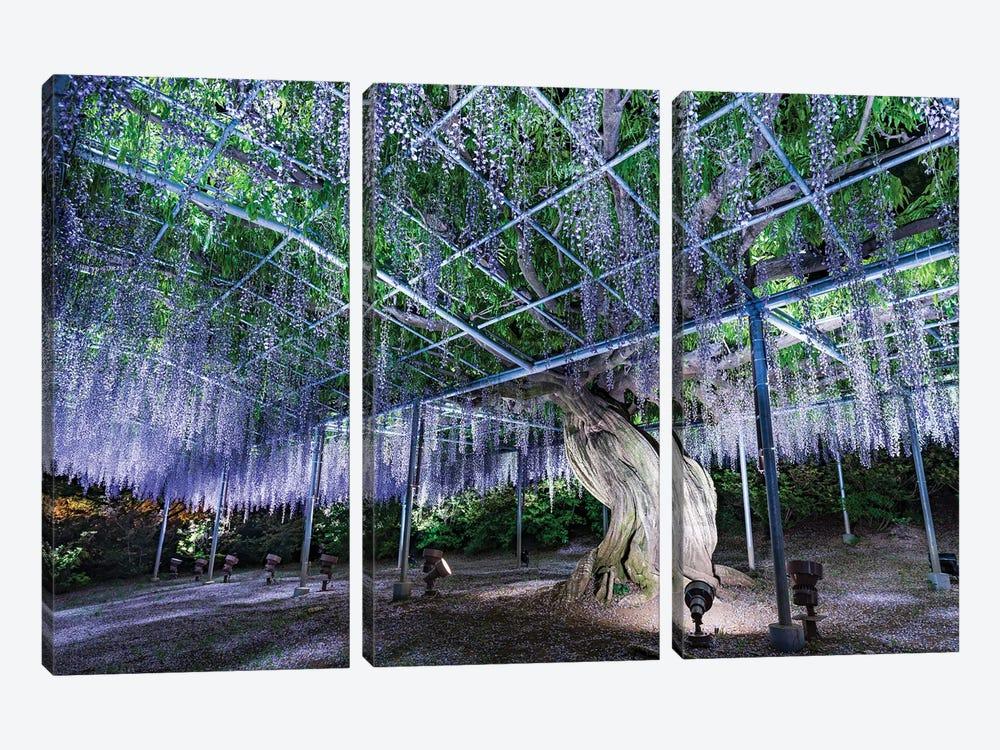 Purple Wisteria Tree At The Ashikaga Flower Park, Tochigi Prefecture, Japan by Jan Becke 3-piece Canvas Wall Art