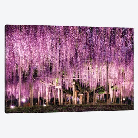 Wisteria At The Ashikaga Flower Park, Tochigi Prefecture, Japan Canvas Print #JNB1501} by Jan Becke Canvas Print