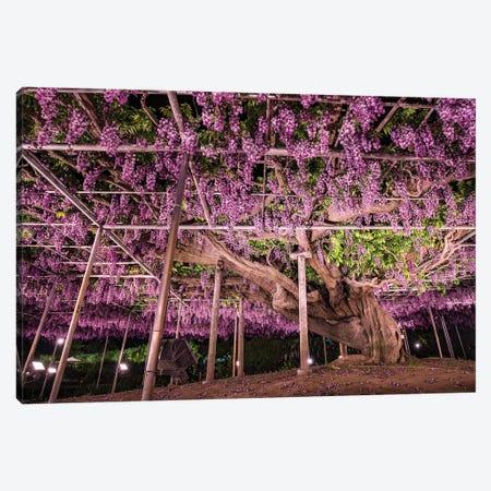 Giant Wisteria Tree At The Ashikaga Flower Park, Tochigi Prefecture, Japan Canvas Print #JNB1502} by Jan Becke Art Print