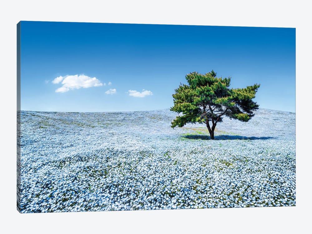 Baby Blue Eyes Nemophila Flowers In Full Bloom, Hitatchi Seaside Park, Japan by Jan Becke 1-piece Canvas Print