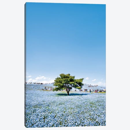 Lonely Tree With Baby Blue Eyes Nemophila Flowers At The Hitatchi Seaside Park Canvas Print #JNB1504} by Jan Becke Canvas Artwork