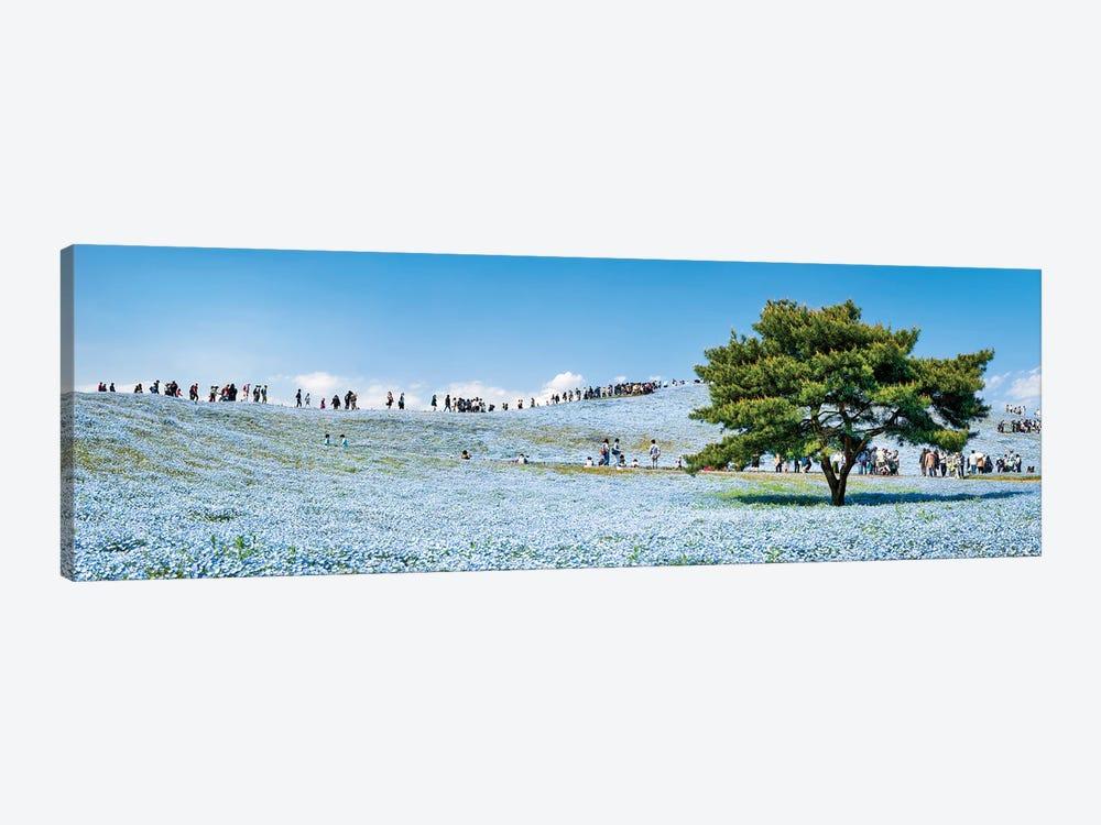 Baby Blue Eyes Nemophila Flowers At The Hitatchi Seaside Park by Jan Becke 1-piece Canvas Art Print