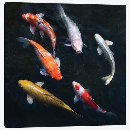 Colorful Koi Carps In A Garden Pond Canvas Print #JNB1513} by Jan Becke Canvas Art