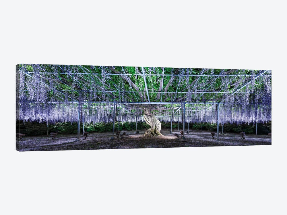Panoramic View Of A Giant Wisteria Tree At The Ashikaga Flower Park, Tochigi Prefecture, Japan by Jan Becke 1-piece Canvas Print