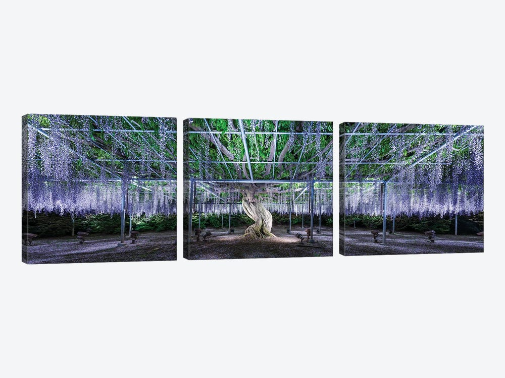 Panoramic View Of A Giant Wisteria Tree At The Ashikaga Flower Park, Tochigi Prefecture, Japan by Jan Becke 3-piece Canvas Print