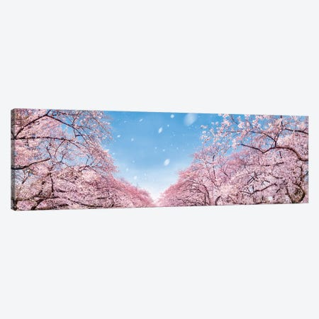 Panoramic View Of Cherry Blossom Trees In Full Bloom Canvas Print #JNB1537} by Jan Becke Canvas Art Print