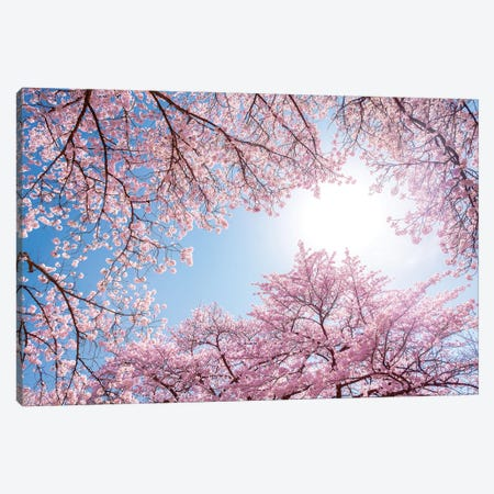 Cherry Blossom In Spring Canvas Print #JNB1542} by Jan Becke Canvas Art Print