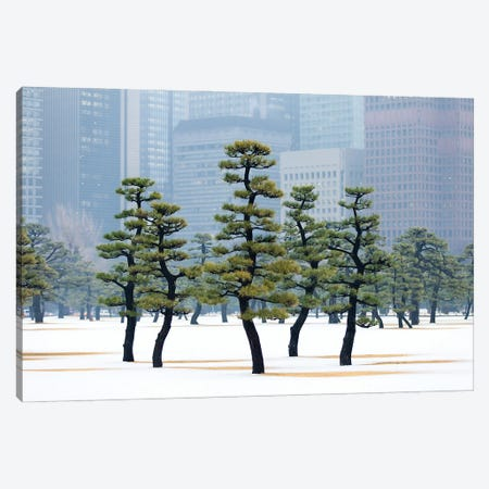 Pine Trees At The Kokyo Gaien National Garden In Tokyo Canvas Print #JNB1568} by Jan Becke Canvas Print