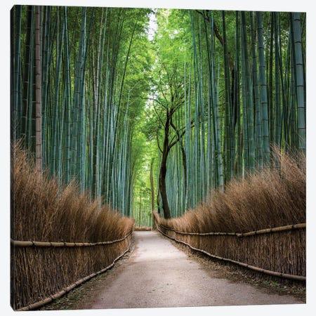 Arashiyama Bamboo Forest, Kyoto, Japan Canvas Print #JNB1596} by Jan Becke Canvas Print