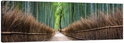 Panoramic View Of The Arashiyama Bamboo Forest, Kyoto, Japan Canvas Art Print