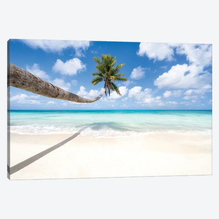 Hanging Palm Tree At The Beach Canvas Print #JNB1689} by Jan Becke Canvas Art