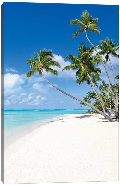Coconut Trees At The Beach On Bora Bora Canvas Art Print
