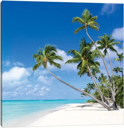 Tropical Island On Bora Bora Canvas Art Print