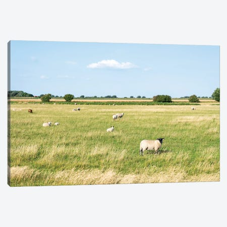 Flock Of Sheep Near The North Sea Coast, Sankt Peter-Ording, Germany Canvas Print #JNB424} by Jan Becke Canvas Wall Art