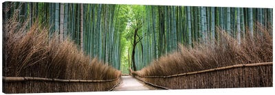 Arashiyama Bamboo Forest Canvas Art Print