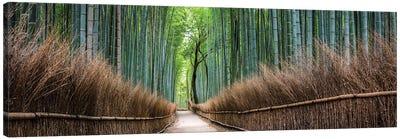 Arashiyama Bamboo Forest Canvas Art Print