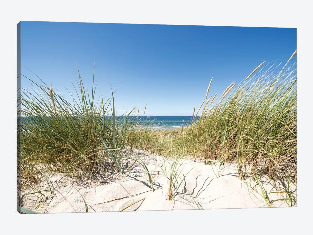 European dune grass at the North Sea coast by Jan Becke 1-piece Canvas Art Print