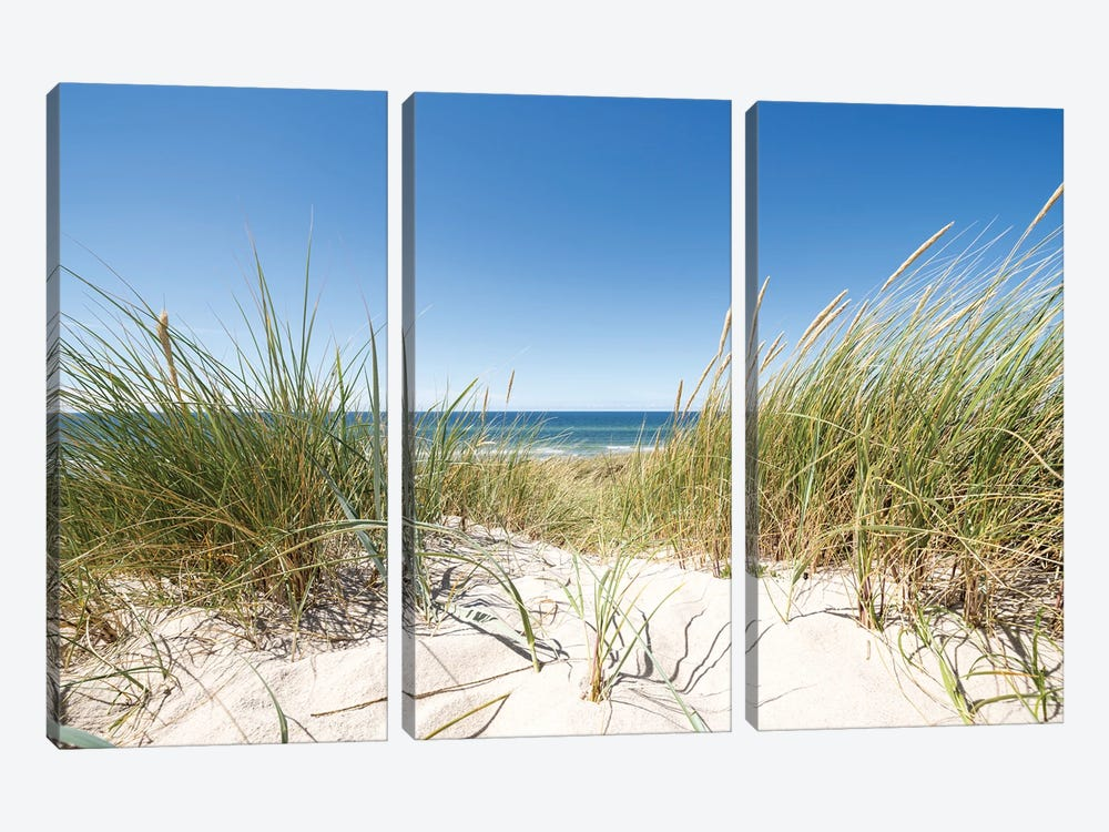 European dune grass at the North Sea coast by Jan Becke 3-piece Art Print