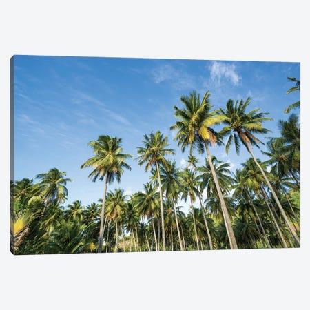 Palm tree plantation, French Polynesia Canvas Print #JNB519} by Jan Becke Canvas Art Print