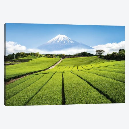 Green Tea Plantation And Mount Fuji Canvas Print #JNB56} by Jan Becke Canvas Art Print