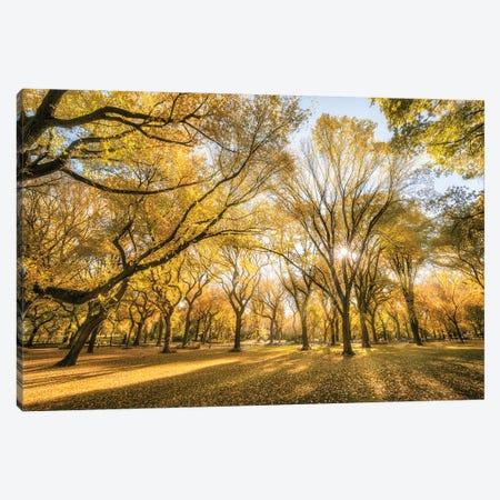American Elm Trees In Autumn Season, Central Park, New York City, USA Canvas Print #JNB806} by Jan Becke Canvas Wall Art