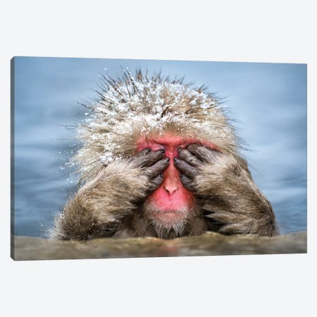 See-No-Evil Monkey Canvas Print #JNB96} by Jan Becke Art Print