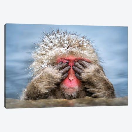 See-No-Evil Monkey Canvas Print #JNB96} by Jan Becke Art Print