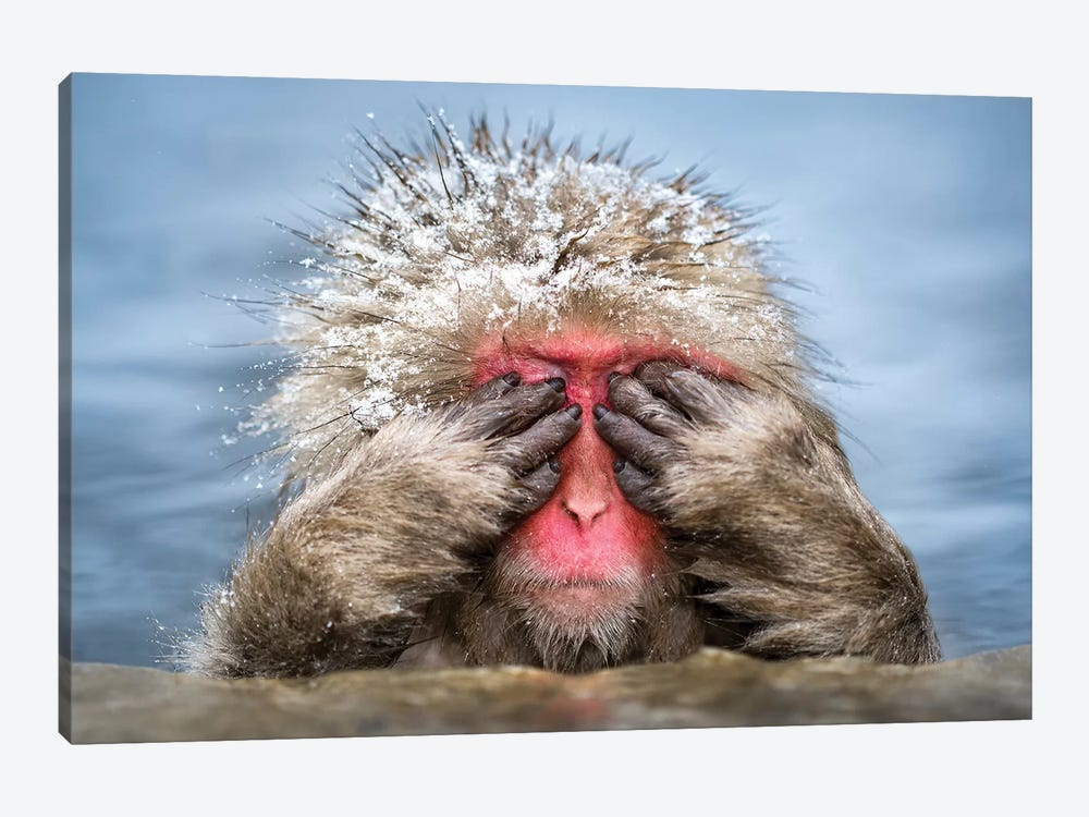 See-No-Evil Monkey by Jan Becke 1-piece Canvas Artwork