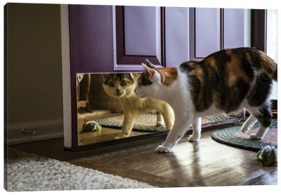 Calico cat looking at her reflection in the door.  Canvas Art Print