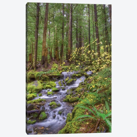 Forest Landscape With Cascading Stream, Sol Duc River Valley, Olympic National Park, Washington, USA Canvas Print #JNS1} by Jones & Shimlock Canvas Print