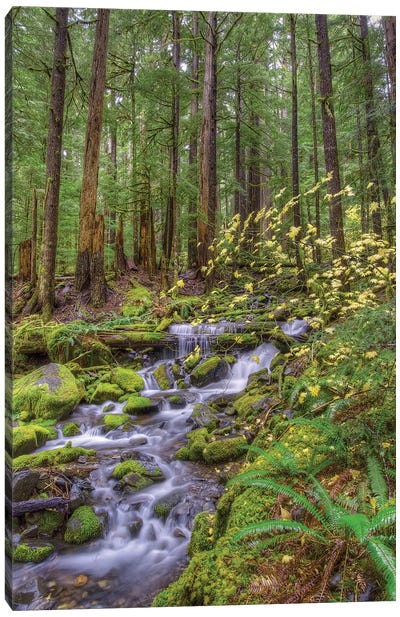 Forest Landscape With Cascading Stream, Sol Duc River Valley, Olympic National Park, Washington, USA Canvas Print #JNS1