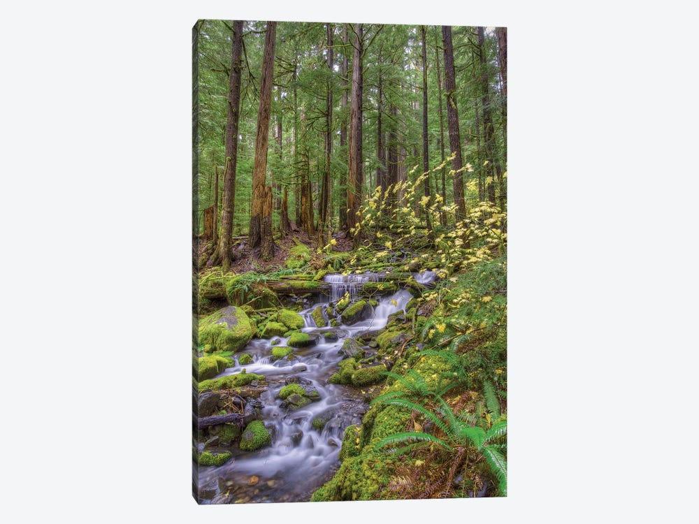 Forest Landscape With Cascading Stream, Sol Duc River Valley, Olympic National Park, Washington, USA by Jones & Shimlock 1-piece Art Print
