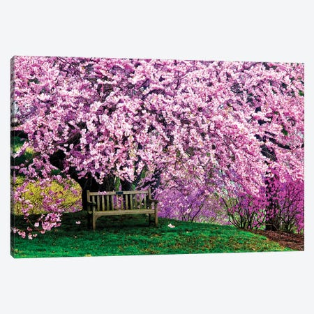 Tribute Bench Under A Cherry Blossom, Winterthur Museum, Garden And Library, Winterthur, Delaware, USA Canvas Print #JOB1} by Jay O'Brien Canvas Art
