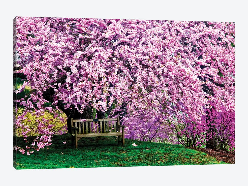 Tribute Bench Under A Cherry Blossom, Winterthur Museum, Garden And Library, Winterthur, Delaware, USA by Jay O'Brien 1-piece Art Print
