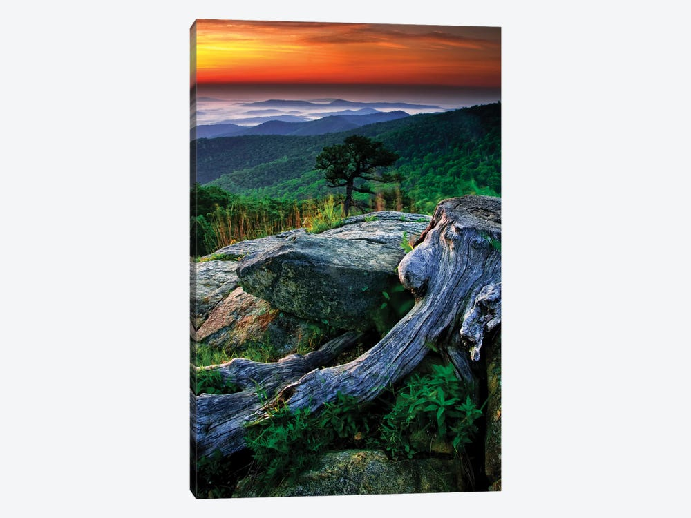 Sunrise Over The Fog-Covered Blue Ridge Mountains, Shenandoah National Park, Virginia, USA by Jay O'Brien 1-piece Art Print