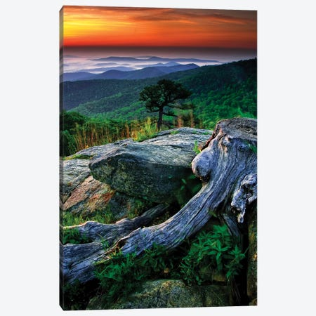Sunrise Over The Fog-Covered Blue Ridge Mountains, Shenandoah National Park, Virginia, USA Canvas Print #JOB5} by Jay O'Brien Canvas Print