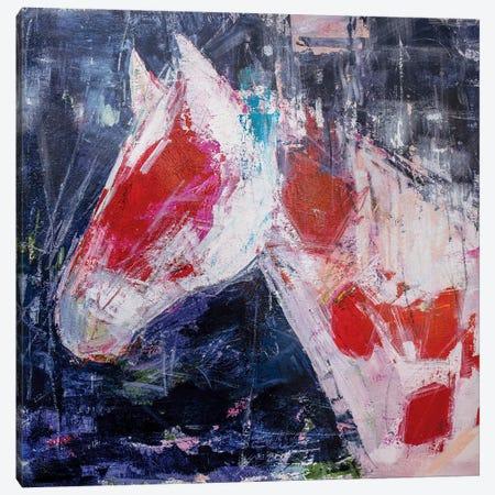 Coy Colt Canvas Print #JOD29} by Jodi Maas Canvas Art