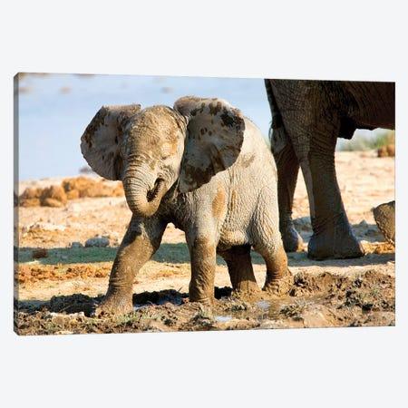 Baby African Elephant In Mud, Halali Resort, Etosha Pan, Namibia, Africa: 3-Piece Canvas #JOE15} by Joe Restuccia III Canvas Print