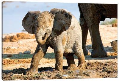 Baby African Elephant In Mud, Halali Resort, Etosha Pan, Namibia, Africa: Canvas Art Print