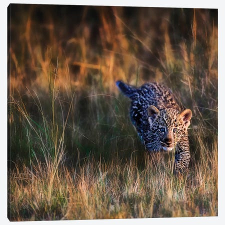 Leopard Cub, Maasai Mara National Reserve, Kenya Canvas Print #JOE1} by Joe Restuccia III Canvas Art Print