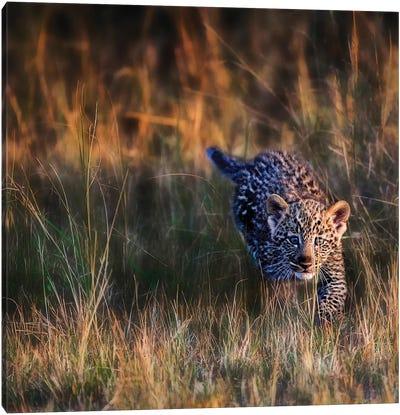Leopard Cub, Maasai Mara National Reserve, Kenya Canvas Art Print