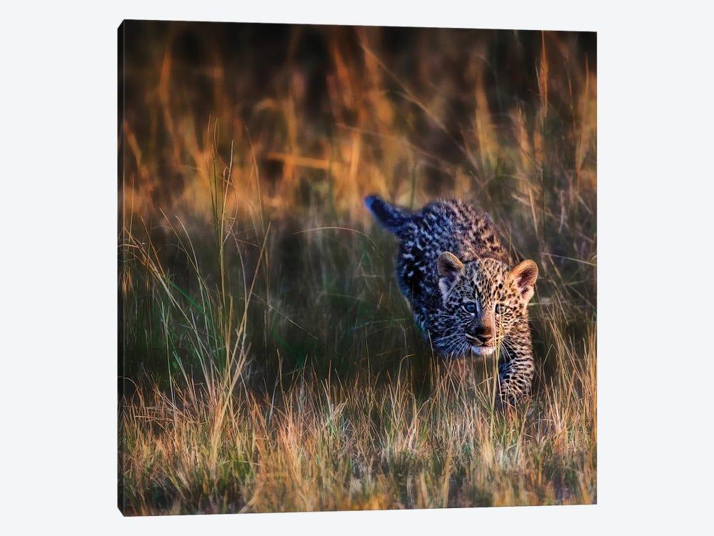 Leopard Cub, Maasai Mara National Reserve, Kenya by Joe Restuccia III 1-piece Canvas Art