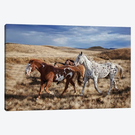 Running Horses, The Hideout Lodge & Guest Ranch, Shell, Big Horn County, Wyoming, USA Canvas Print #JOE4} by Joe Restuccia III Canvas Wall Art
