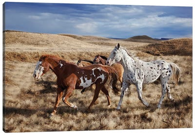 Running Horses, The Hideout Lodge & Guest Ranch, Shell, Big Horn County, Wyoming, USA Canvas Art Print