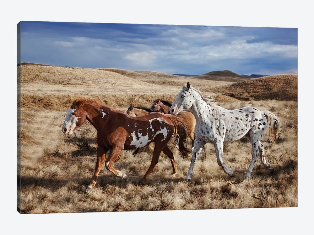 Running Horses, The Hideout Lodge & Guest Ranch, Shell, Big Horn County, Wyoming, USA by Joe Restuccia III 1-piece Art Print