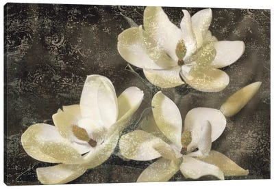 The Magnolia Tree Canvas Art Print